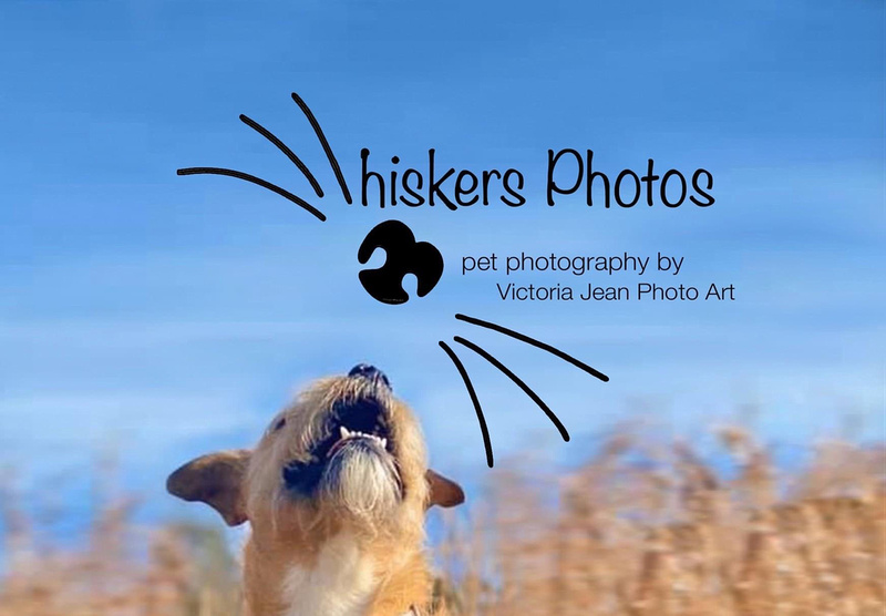 Whiskers Photos