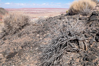 Painted Desert Brush